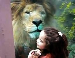 face to face with lion
